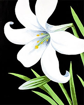 Easter Lily Acrylic Painting on Canvas Art Kit